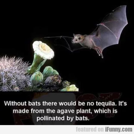 Without Bats There Would Be No Tequila. It's...
