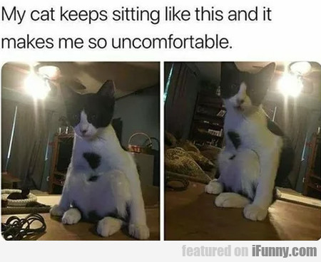 My Cat Keeps Sitting Like This And It Makes Me...