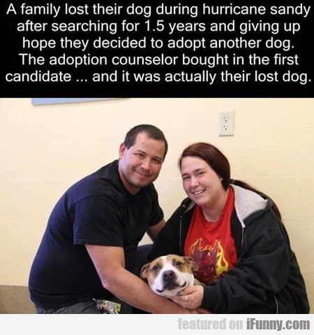 A Family Lost Their Dog During Hurricane Sandy...
