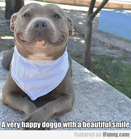 A Very Happy Doggo With A Beautiful Smile...