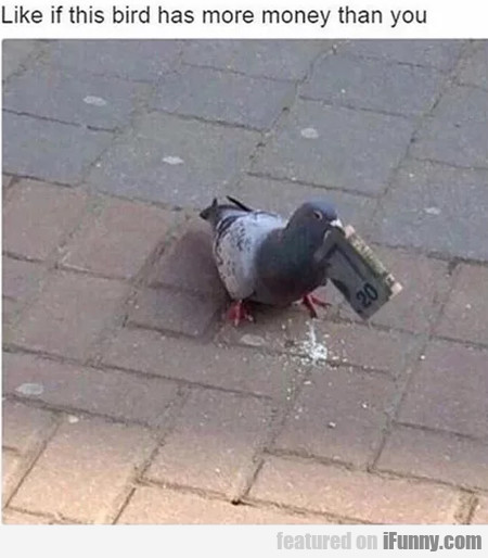 Like If This Bird Has More Money Than You...