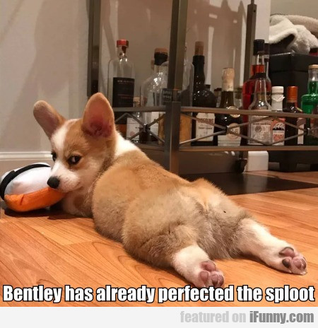 Bentley Has Already Perfected The Sploot