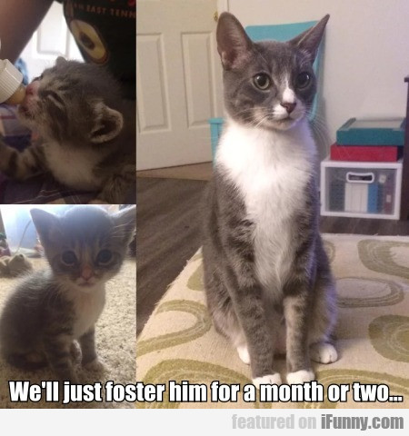 We'll just foster him for a month or two...