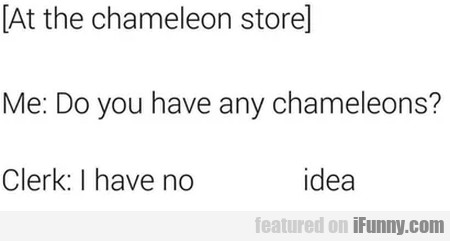 At The Chameleon Store - Me - Do You Have Any...
