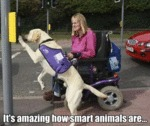 It's Amazing How Smart Animals Are...