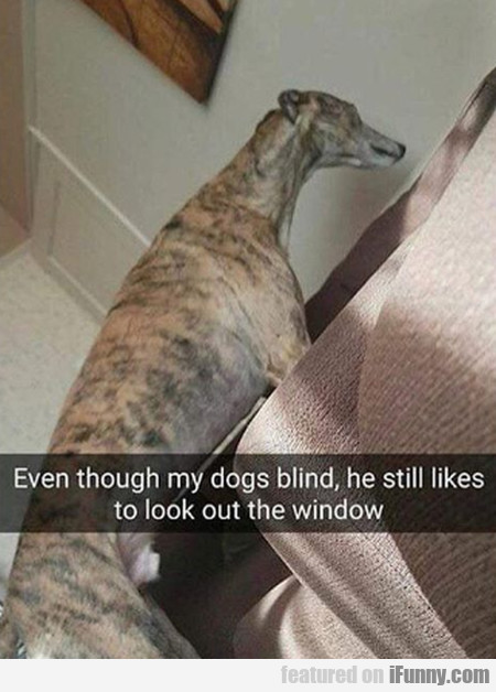 Even Though My Dogs Blind, He Still Likes To...