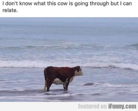 I Don't Know What This Cow Is Going Through...