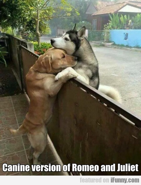 Canine version of Romeo and Juliet...
