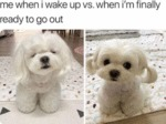 Me When I Wake Up Vs When I'm Finally...