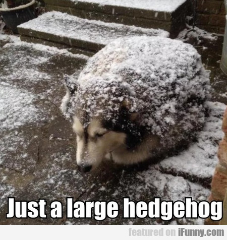 Just A Large Hedgehog