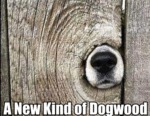 A New Kind Of Dogwood