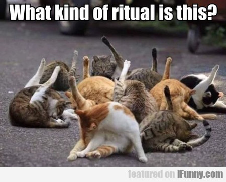 What Kind Of Ritual Is This?