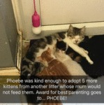 Phoebe Was Kind Enough To Adopt 5 More Kittens...