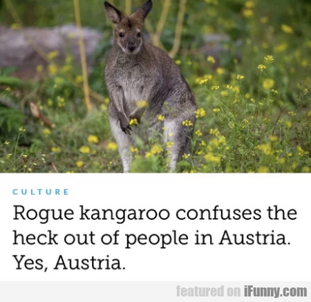 Rogue Kangaroo Confuses The Heck Out Of...