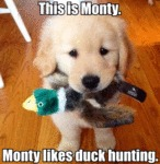 This Is Monty. Monty Likes Duck Hunting...