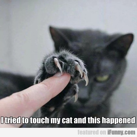 I Tried To Touch My Cat And This Happened