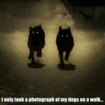 I Only Took A Photograph Of My Dogs On A Walk...