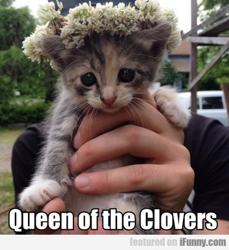 Queen Of The Clovers