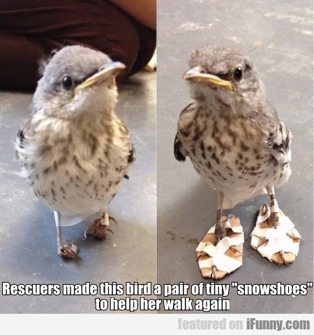 Rescuers Made This Bird A Pair Of Tiny...