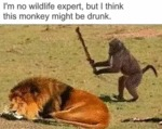 I'm No Wildlife Expert, But I Think This Monkey...