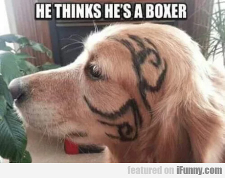 He Thinks He's A Boxer...