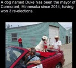 A Dog Named Duke Has Been The Mayor Of...