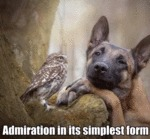 Admiration In Its Simplest Form...