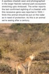 A Spotless Cheetah Seen And Photographed In...
