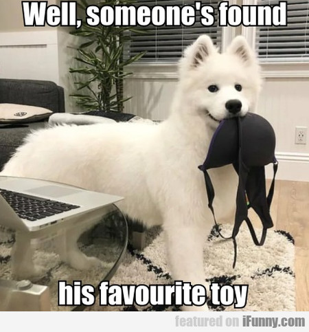 Well, Someone's Found His Favourite Toy