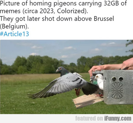 Picture Of Homing Pigeons Carrying 32 Gb Of...