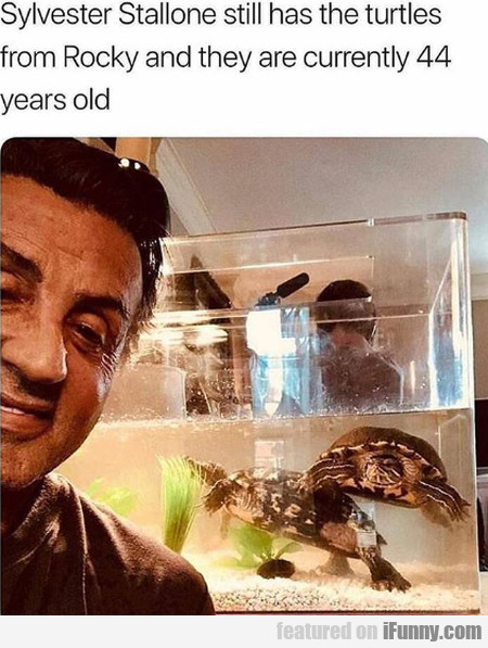 Sylvester Stallone Still Has The Turtles From...