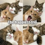 The Happiest Trio