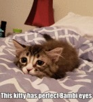 This Kitty Has Perfect Bambi Eyes...