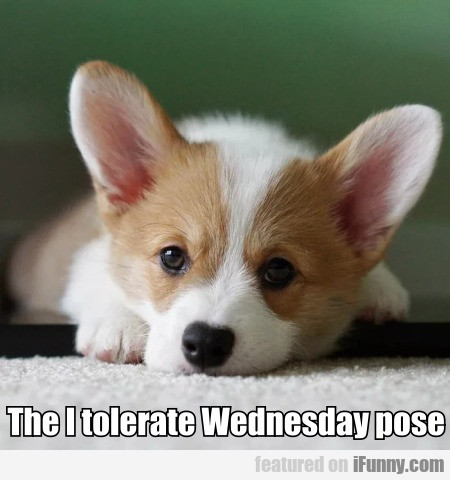 The I Tolerate Wednesday Pose