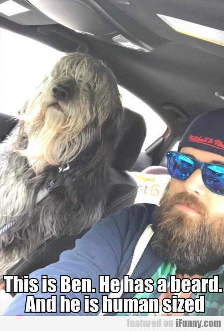 This Is Ben. He Has A Beard. And He Is Human Sized