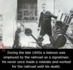 During The Late 1800s A Baboon Was Employed By...