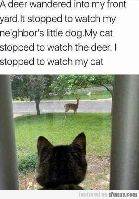 A Deer Wandered Into My Front Yard. It Stopped...