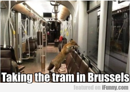 Taking The Tram In Brussels...