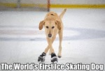 The World's First Ice Skating Dog...