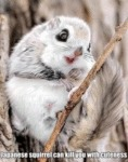 Japanese Squirrel Can Kill You With Cuteness...