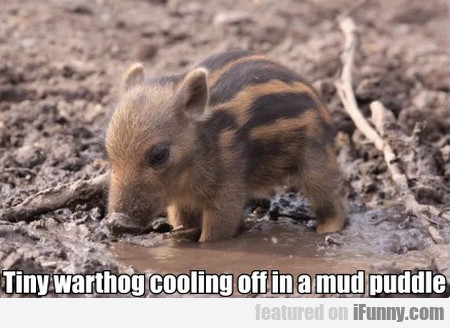 Tiny Warthog Cooling Off In A Mud Puddle