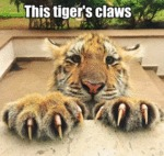 This Tiger's Claws