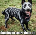 One Dog To Scare Them All