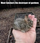 Meet Snickers The Destroyer Of Gardens