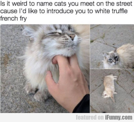 Is It Weird To Name Cats You Meet On The Street...