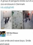 A Group Of Penguins Broke Out Of A Zoo...