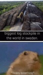 Biggest Log Stockpile In The World In Sweden...