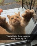This Is Rudy. Rudy Loves Me. Rudy Is Not My Cat