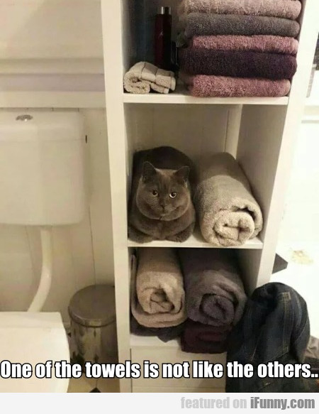 One Of The Towels Is Not Like The Others...