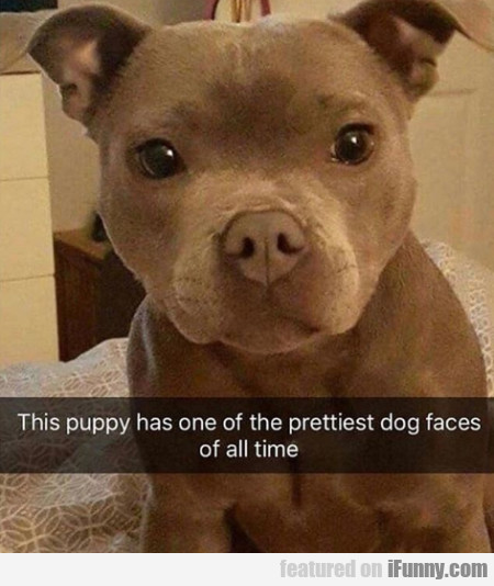 This Puppy Has One Of The Prettiest Dog Faces Of..